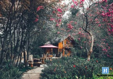 Căn nhà gỗ ở Ma Rừng Lữ Quán